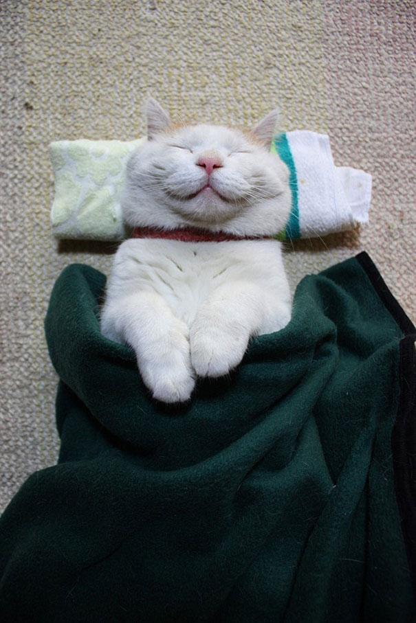 happycat1