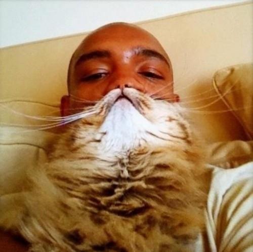 catbeard11