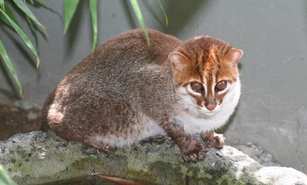 flatheadedcat