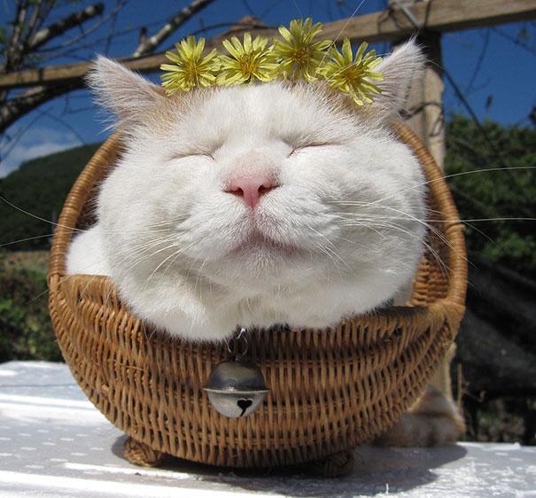 happycat8