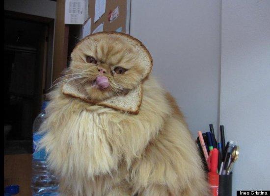 catbread3