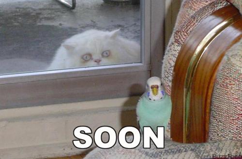 soon8