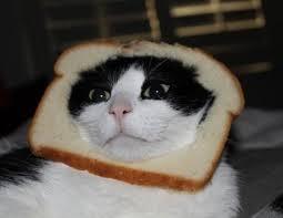 catbread1