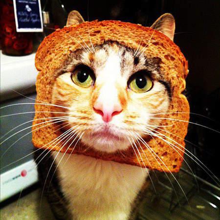 catbread2