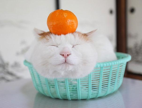 happycat7