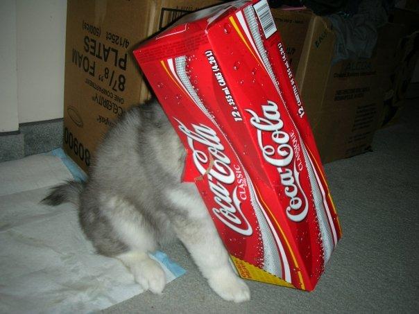 huskycat9