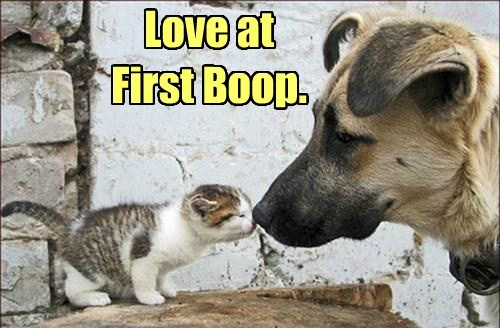 loveatfirstboop