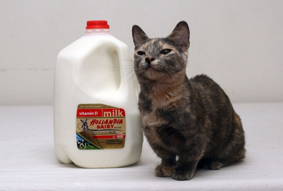 World S Smallest Cat Ever Iz Set To Be A Superstar