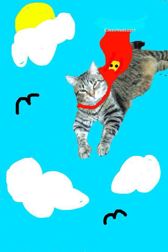 this girl turned her lazy cat into snapchat glory awesome