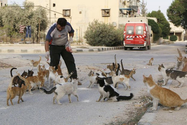 mohammed feeding group of cats
