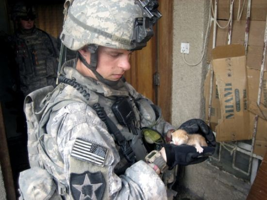 soldier befriending kitten