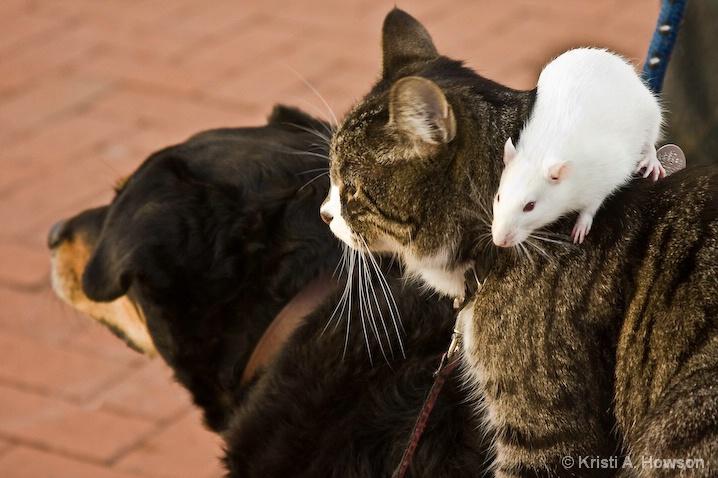 black-cat snap trap