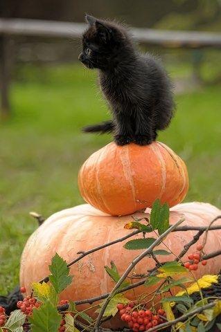 kitten standing on pumpkin