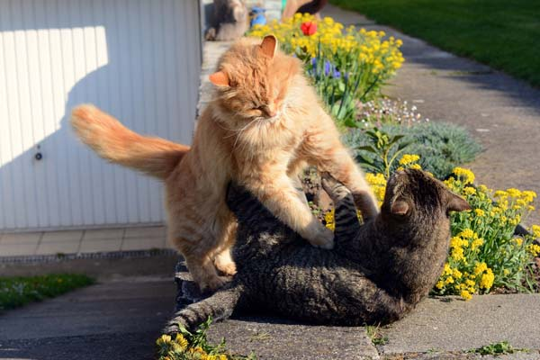 Cat Behavior How To Stop The Violence Of A Fight