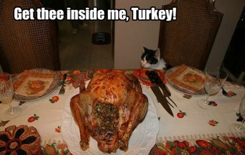 Image result for cats on thanksgiving