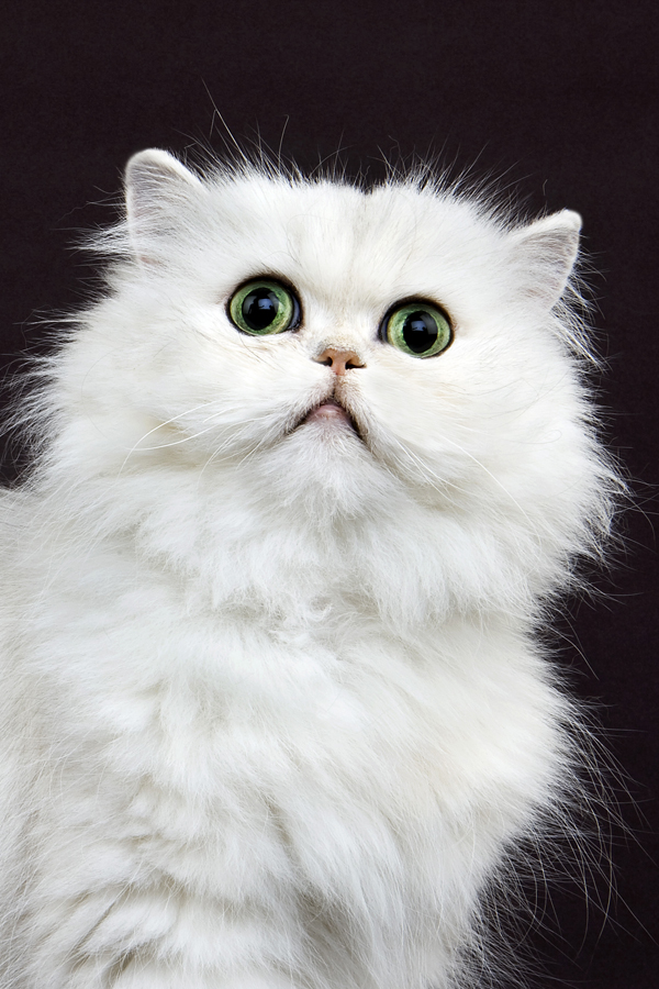 What The Shape Of Your Cat S Face Tells You About Their