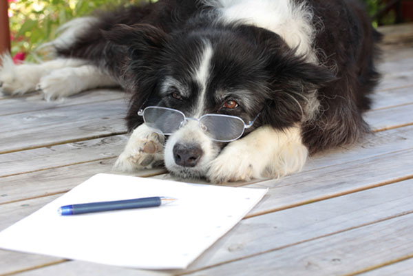 The difference between a dog's diary and a cat's diary