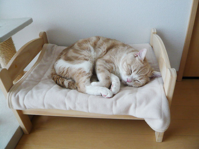 Tiny Bed 17 cats sleeping in adorable little beds will seriously make your day