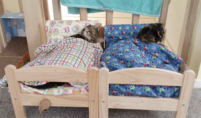 cats sleepin in beds