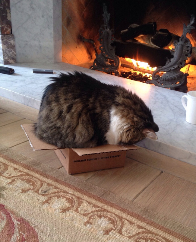 hiding in box