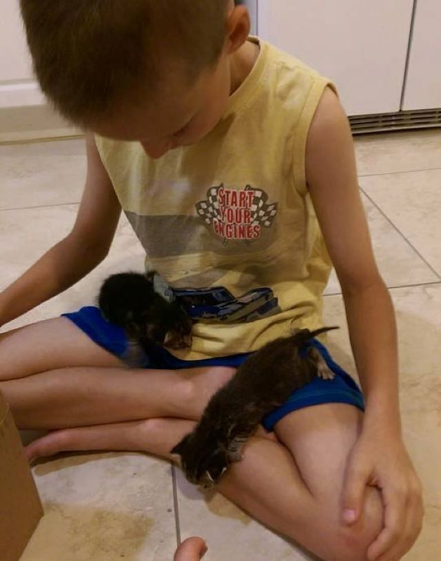Three young boys rescue three kittens from drainage pipe!