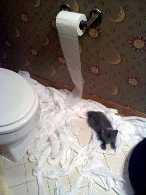 The Never Ending Battle Between Cats And Toilet Paper