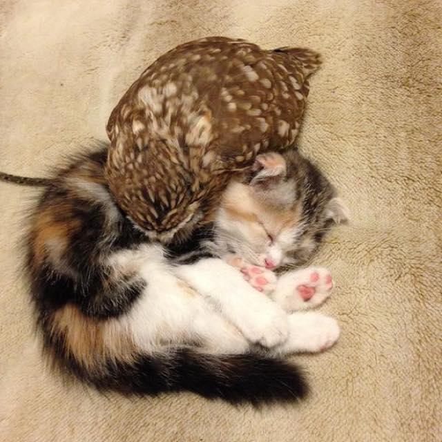 owlcat7