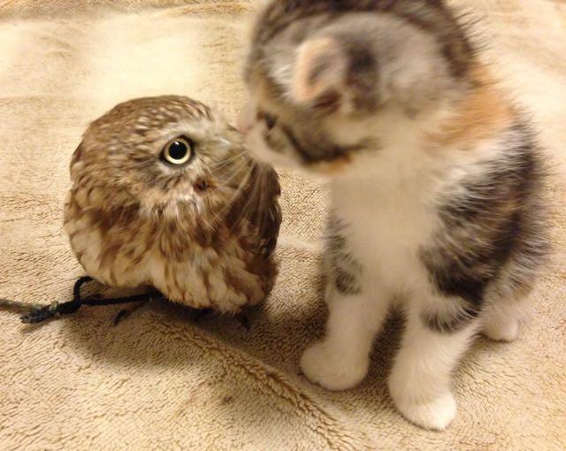 owlcat4