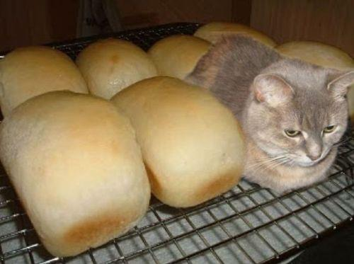 Cat In A Bread Box Best Cat Fails 60 Unbelievably Funny Cat Pics CertaPet