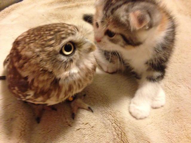 owlcat3