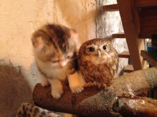 owlcat6