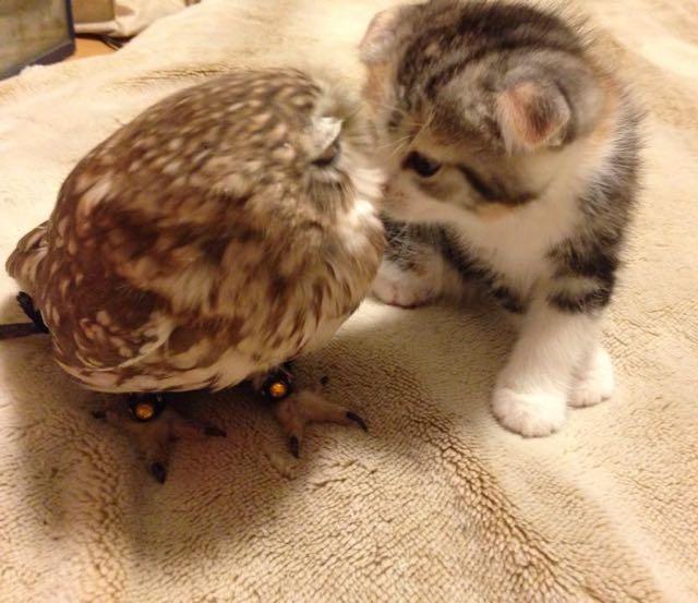 owlcat5
