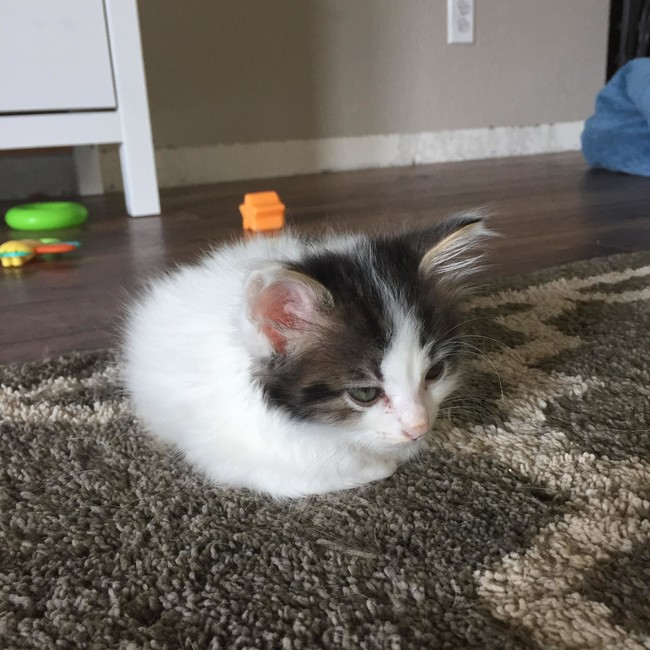 Adorable Photos Of Cats Who Turned Into Loaves Of Bread I - 29 cute cats that have morphed into cat loaves