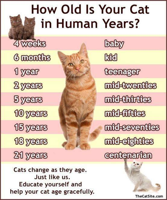 Can You Give  Years Cat Food To A Cat