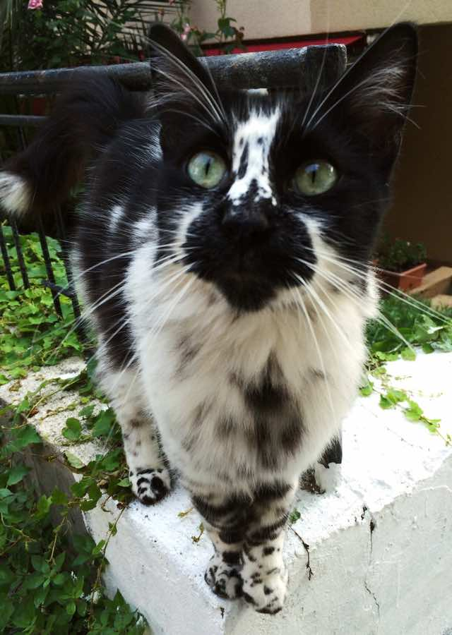 Cat With Black Specks In Hair