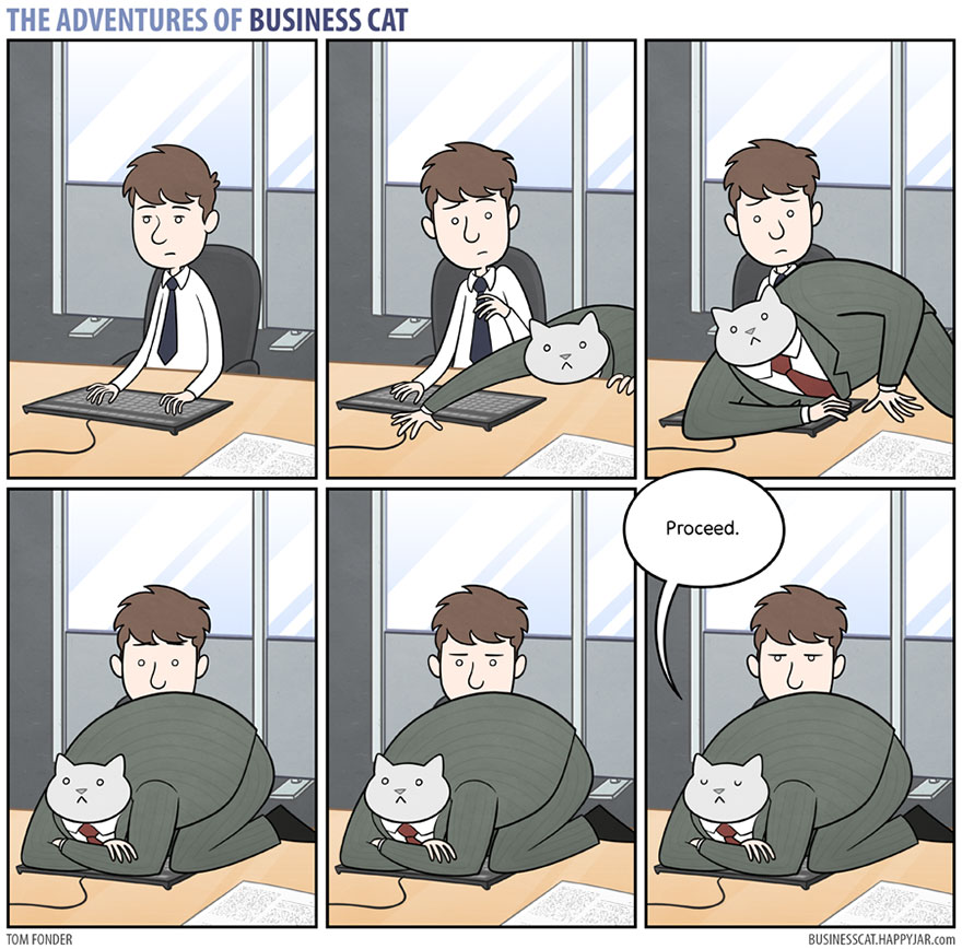 9sezo bc3 how your office would look if your boss was a cat (gallery),Cat Boss Meme