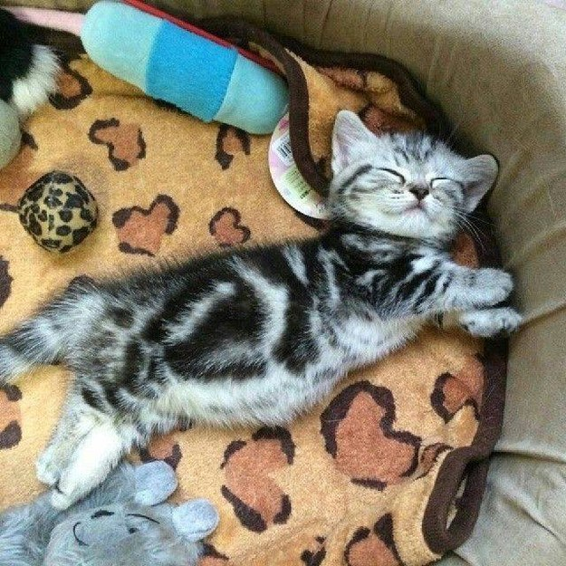 21 Reasons Why You Should Fall In Love With A Cat Person