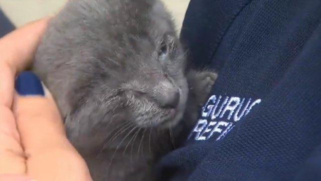 Kitten stuck in filthy drain pipe rescued by heroic firefighters