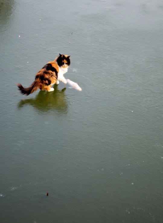catfish6