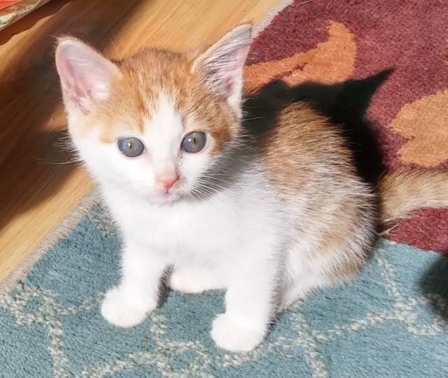 kittennote