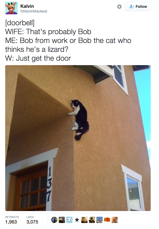 Hilarious Tweets About Our Feline Friends - The 27 funniest tweets about cats in 2016