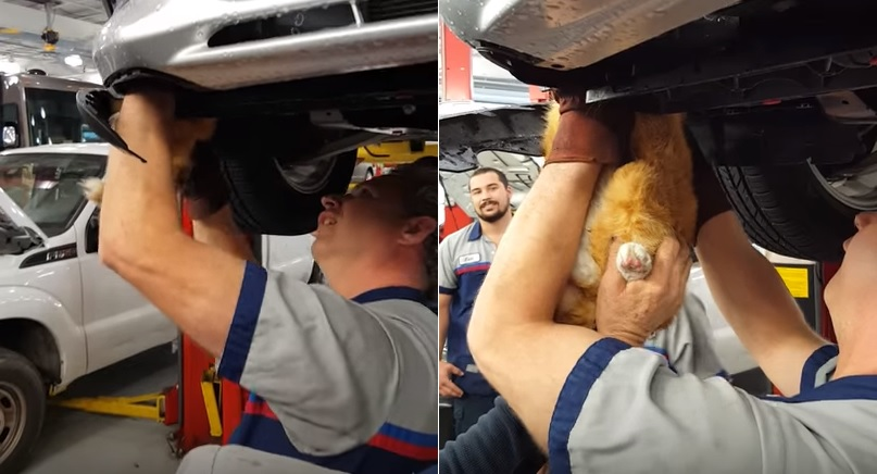 A Mechanic Heard A Strange Noise Come Out From The Car Couldn T