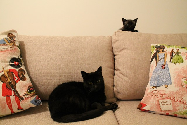 rescued kitten inspires childrens book kind to animals 4