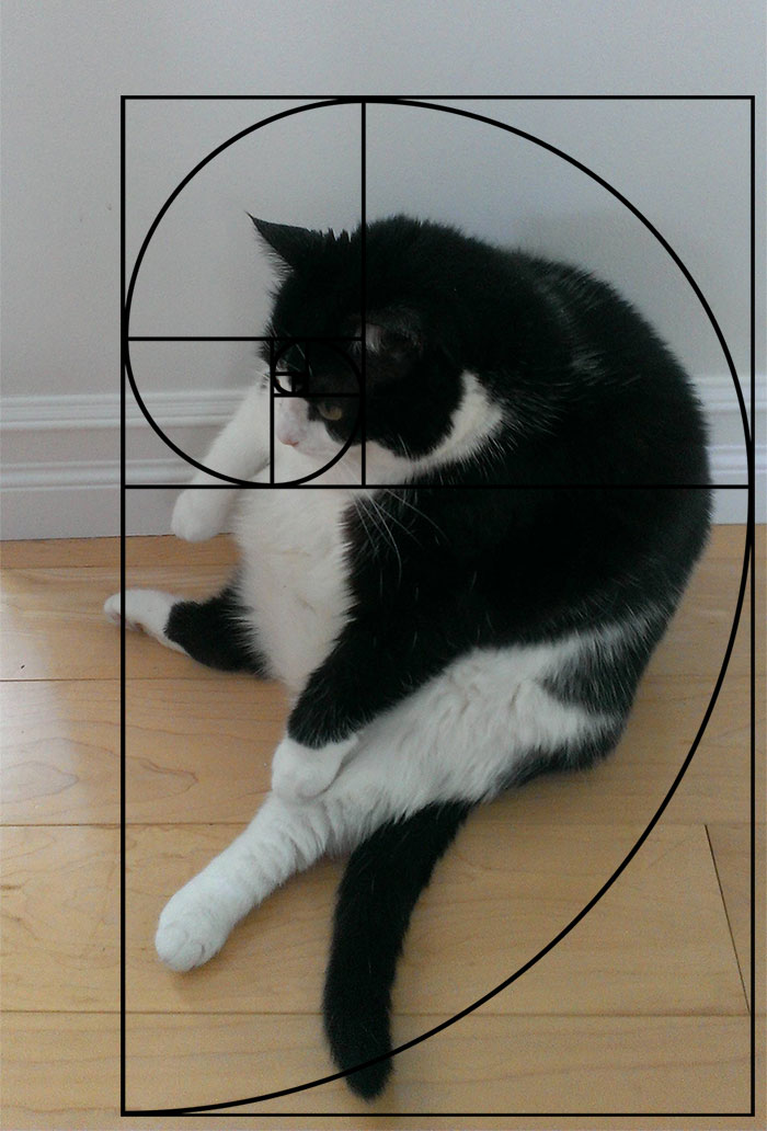 21 cats matching up with the 'Fibonacci Sequence' proves ... Golden Ratio