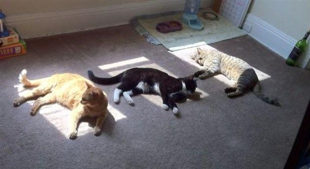 15 Solar Powered Cats Recharging In The Sunbeam