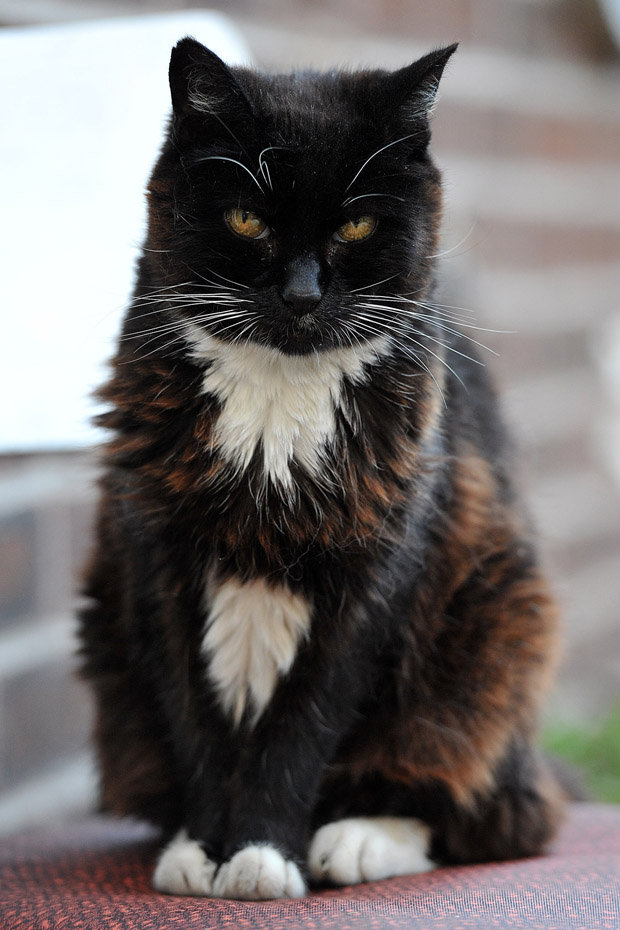 The Oldest Cat Who Ever Lived Ate THIS Everyday... Crazy!