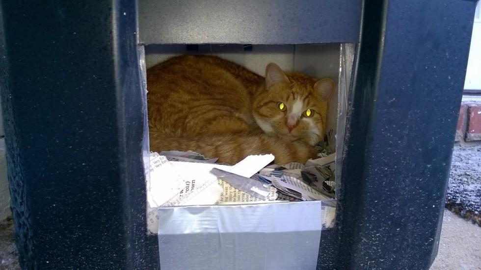 Berea Animal Shelter Cats