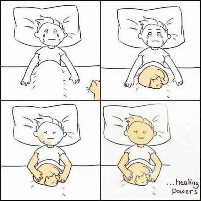 healing powers of cats