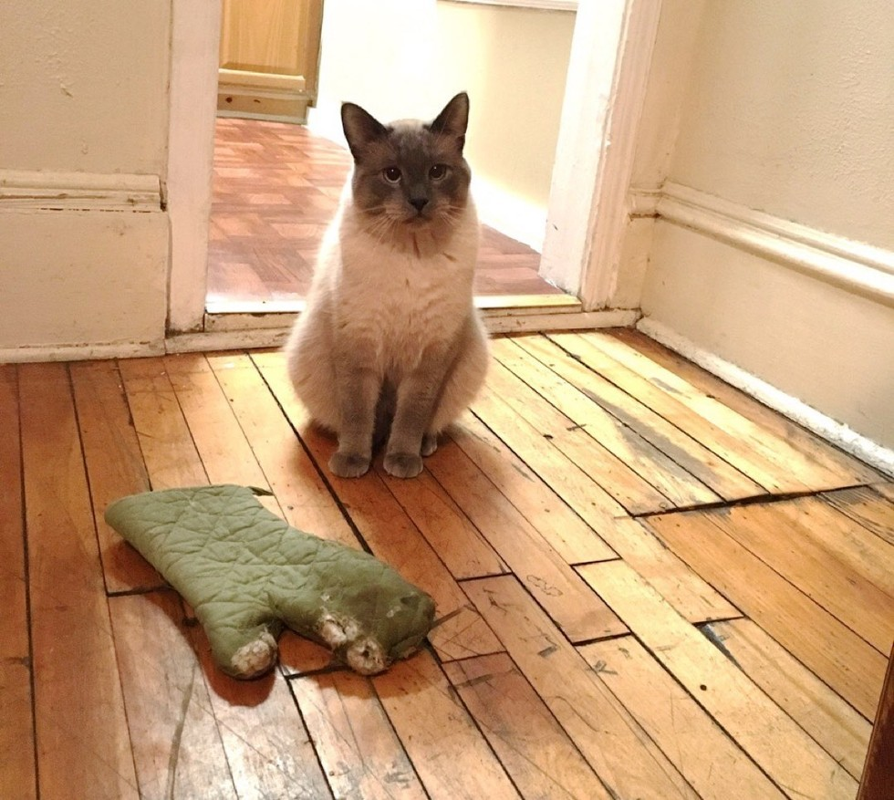 Why Do Cats Bring 'Gifts' of Dead Animals?