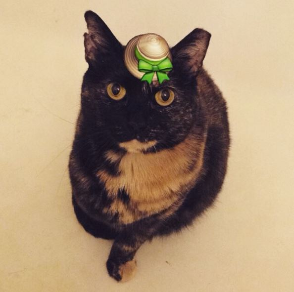 tortie wearing a hat
